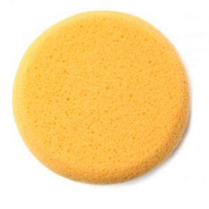 Hydra Sponge gross